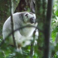 Mpikambana LCN amin'ity volana ity : Wildlife Conservation Society (WCS)