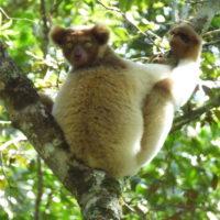 Iray volan'ny mpikambana LCN : Madagasikara Voakajy