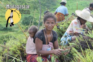 Madagascar Biodiversity Partnership Member of Single mothers Club planting trees_HHamilton