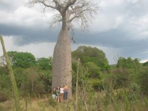 Helena Azafady ACPs by a baobab