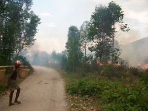 Bush fires represent a threat to lemurs in many areas in Madagascar.