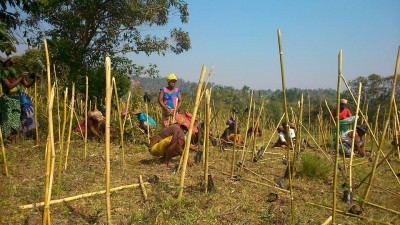 Madagascar Biodiversity Partnership volunteers planting trees. Photo courtesy of MBP.