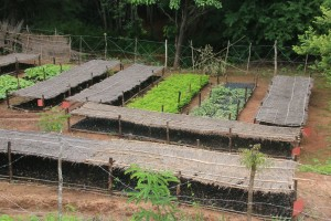 One of Eden Reforestation Projects' tree nurseries. Photo courtesy of Eden Reforestation Projects.