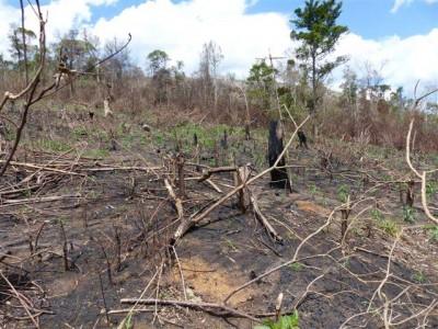 The after effects of slash-and-burn. Photo by Nirina Rakotoharisoa