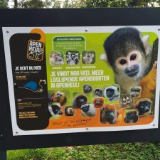 A Visit to the Apenheul Primate Park in the Netherlands