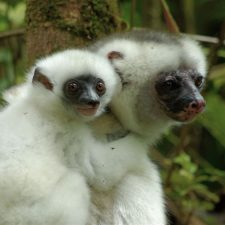 A Look at Lemur Conservation Foundation's Work in Anjanaharibe-Sud Special Reserve