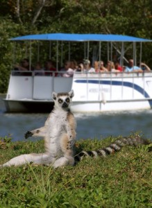 The Importance of Zoos to Lemur Conservation