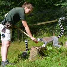 Love Our Lemurs, Love Our Zoos