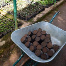 Reforestation in Kianjavato: MBP's Conservation Successes