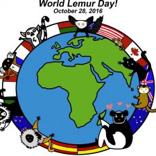 World Lemur Festival 2016- What happened?