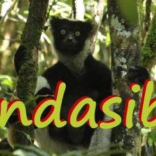 Andasibe: A Film on Deforestation in Madagascar