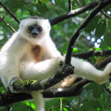 LCN Member of the Month: Lemur Conservation Foundation