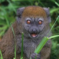 Iray volan'ny mpikambana LCN : Madagascar Wildlife Conservation (MWC)
