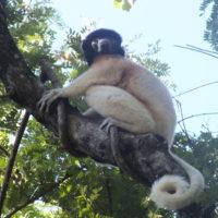 Iray volan'ny mpikambana LCN : Aspinall Foundation Madagascar