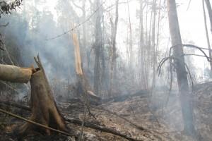 Melanie Seiler After a forest fire