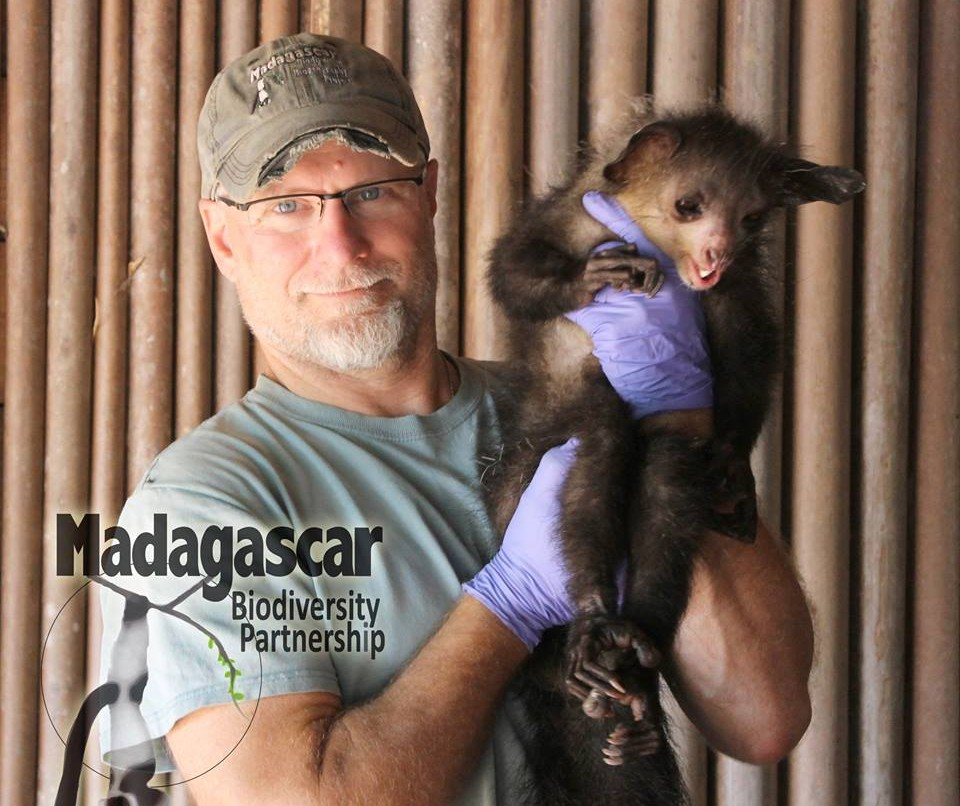 Dr. Ed Louis from Madagascar Biodiversity Partnership, victoriously posing with this aye-aye after his team spent over a year tracking it to outfit it with a GPS tracking collar.