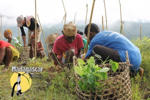 Local Malagasy are employed by the Madagascar Biodiversity Partnership on reforestation efforts.