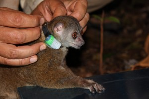 Bristol Zoological Society Pierre Lepi 1