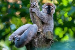 zoo zurich lemur