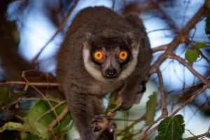 Planet Madagascar