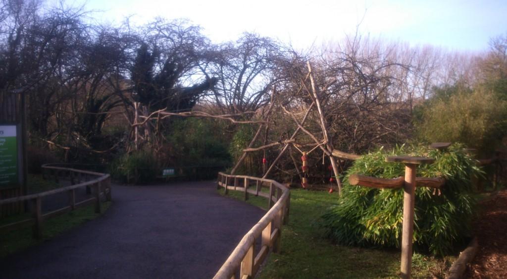 The walk-through lemur area at Howletts