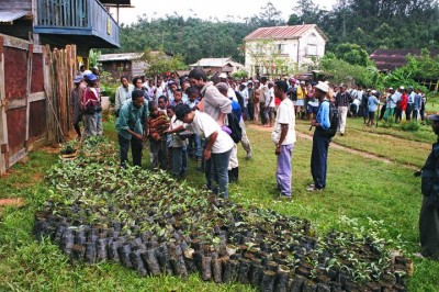 Reforestation efforts in Andasibe.