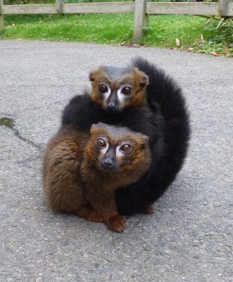 The red bellied brothers